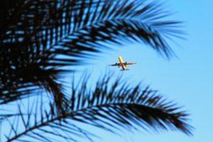 Flugzeug-Palme